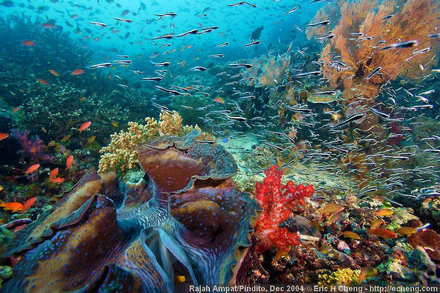 bukti INDONESIA kaya akan keindahan alam