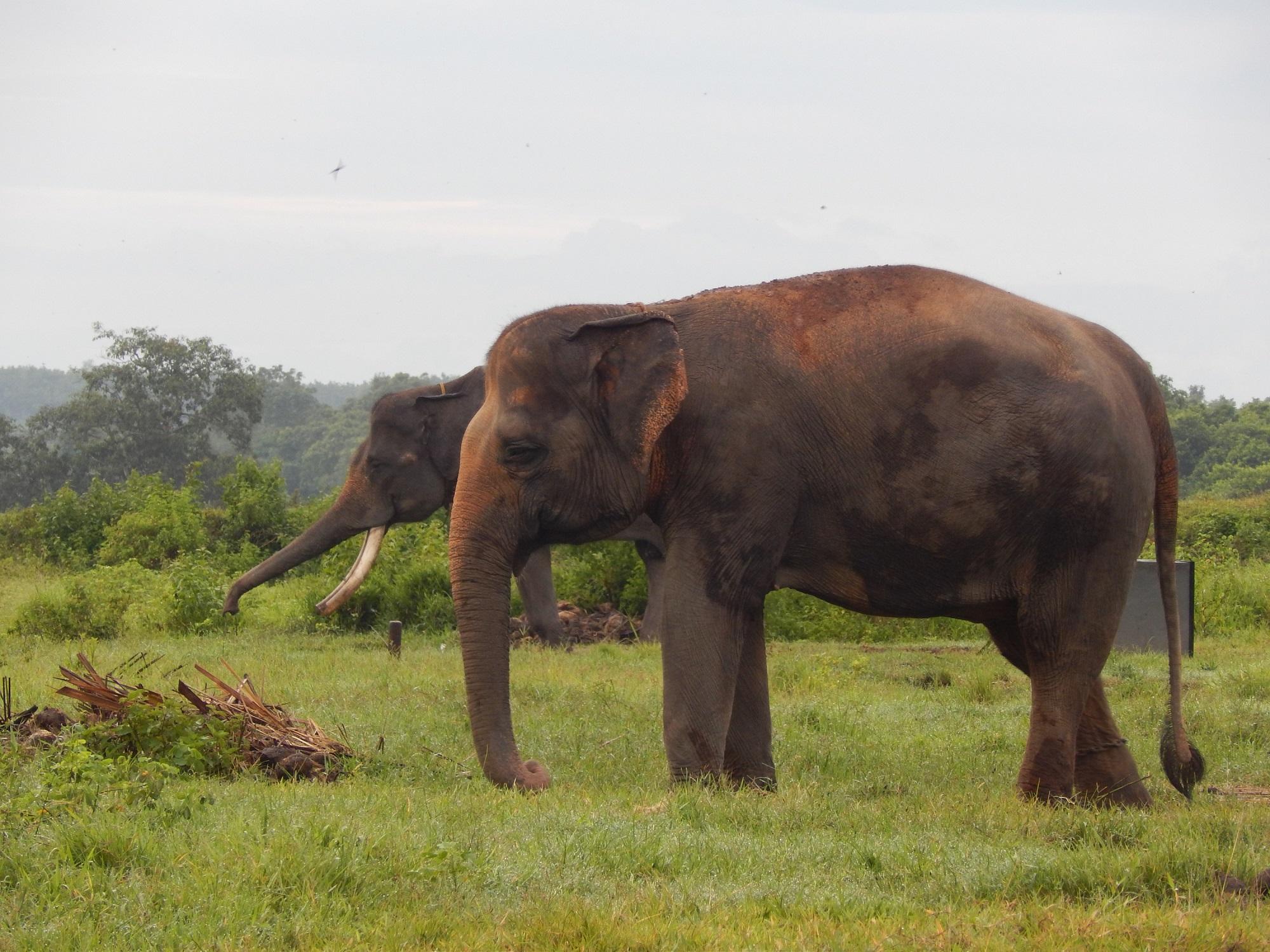 Kelompok Gajah Sumatra yang Dilepas di Kawasan TNWK oleh PKG