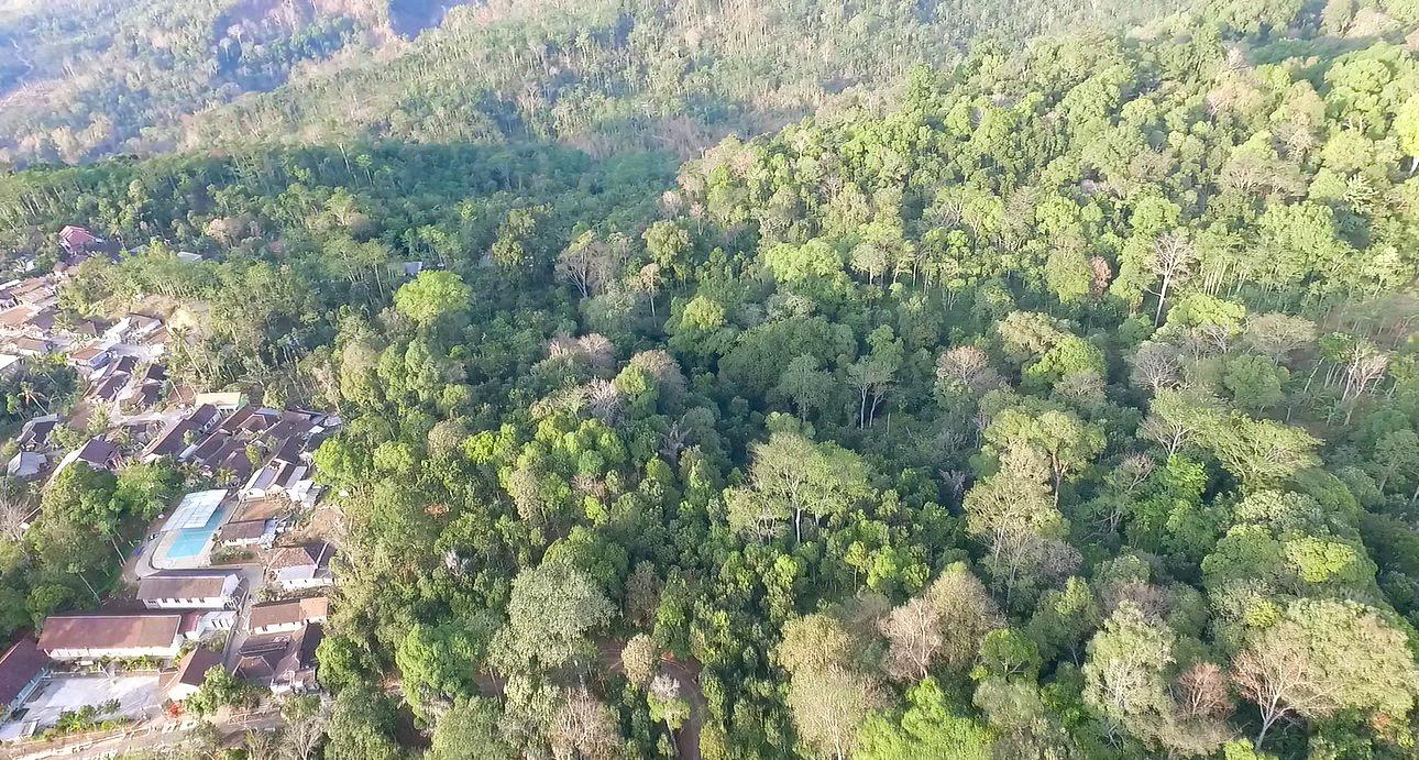 Pemandangan Hutan Kemuning yang berbatasan langsung dengan Desa Kemuning. Hilal Fikriansyah