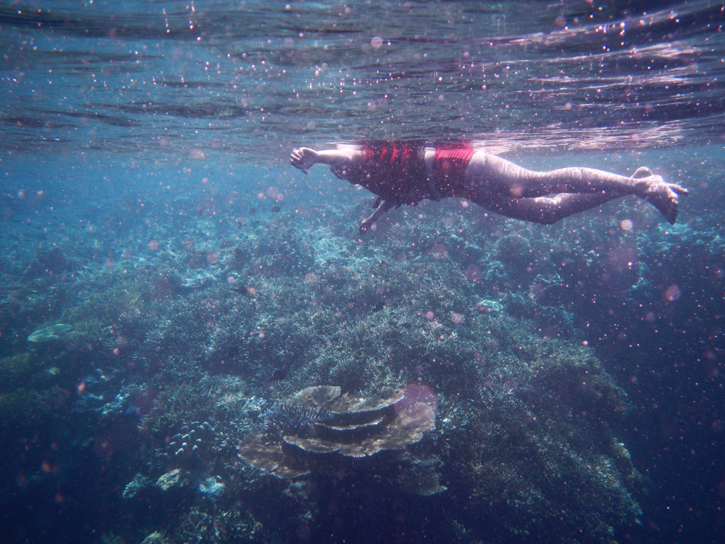 Keindahan bawah laut kakaban @Natalia Oetama