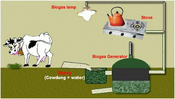 ilustrasi sumber energi biomassa dari kotoran hewan