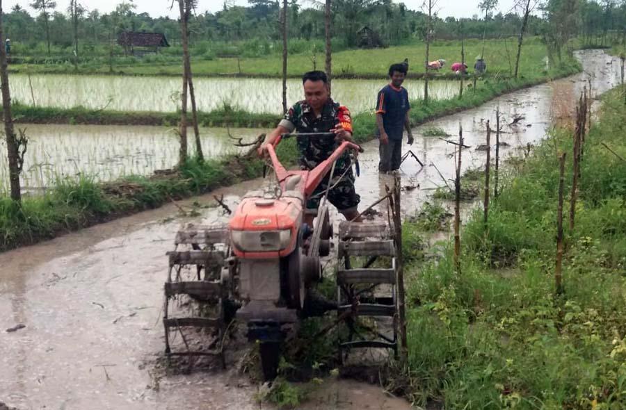 Sertu Basri membajak sawah di Desa Montong Gamang, Lombok Tengah. Foto: Dok. Penrem 162/Wira Bhakti.