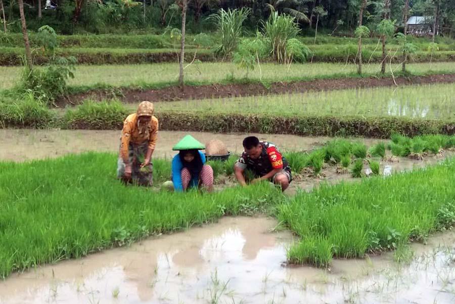 Babinsa Montong Gamang, Sertu TNI Basri Hariawanto bersama petani menyiapkan bibit padi. Foto: Dok. Penrem 162/ Wira Bhakti
