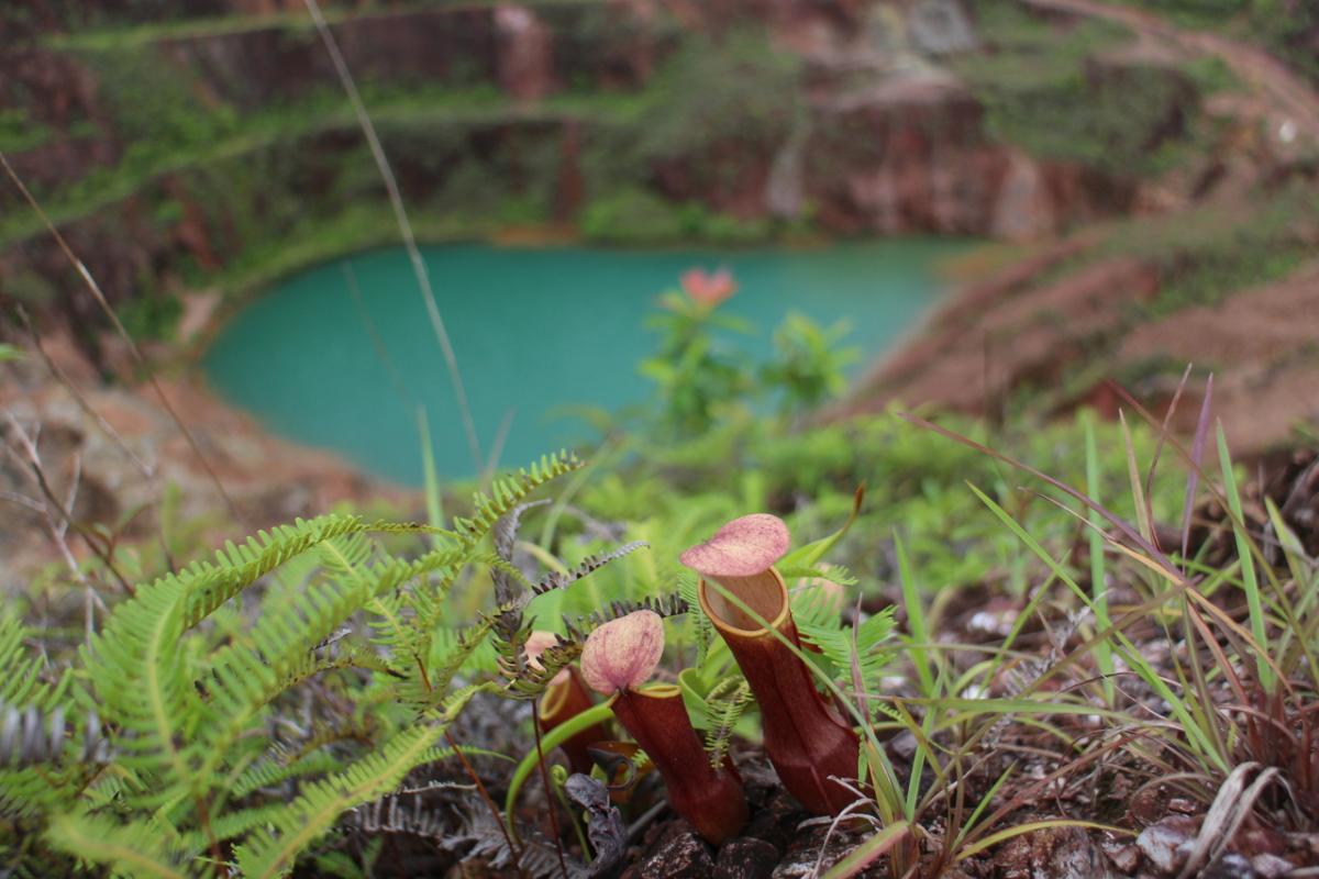 Kantung Semar di Sekitar Open Pit