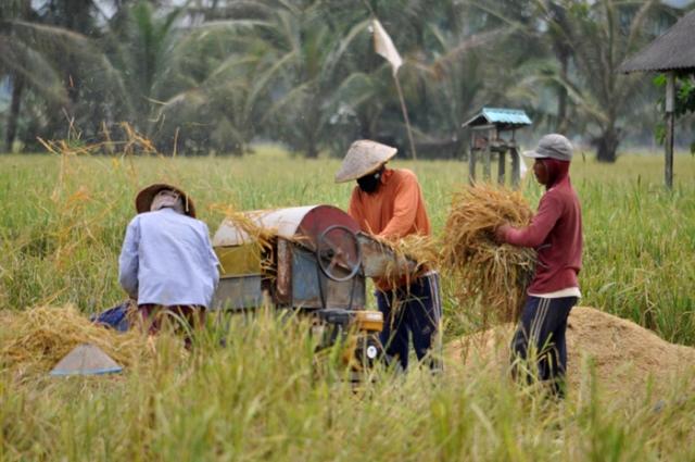 Petani Indonesia (© mongabay.co.id)
