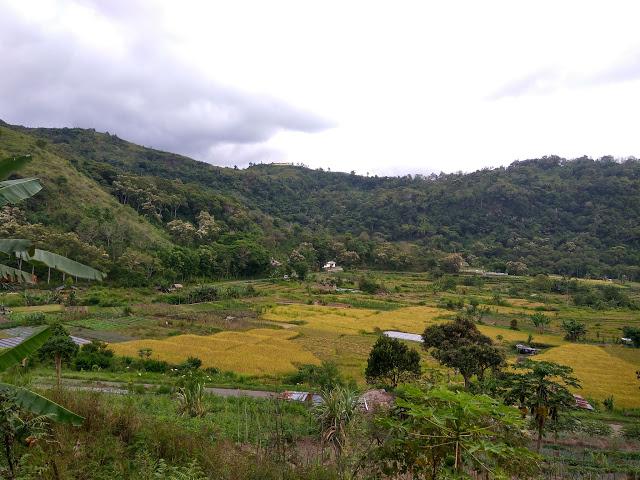 Pesawahan dan Beberapa Rumah di Desa Waturaka, Ende-NTT