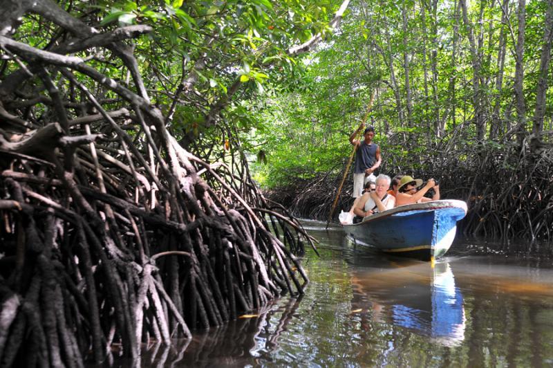 Para Turis Mancanegara Menikmati Ekowisata Mangrove