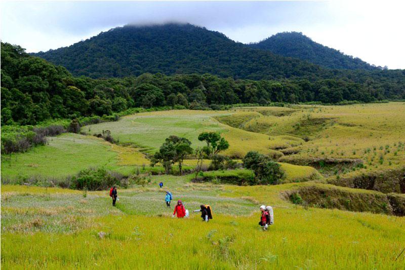 Padang Savana Gunung Bromo