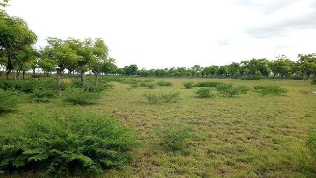 Suasana hijau dan asri menjadi daya tarik pantai ini (DetikTravel)