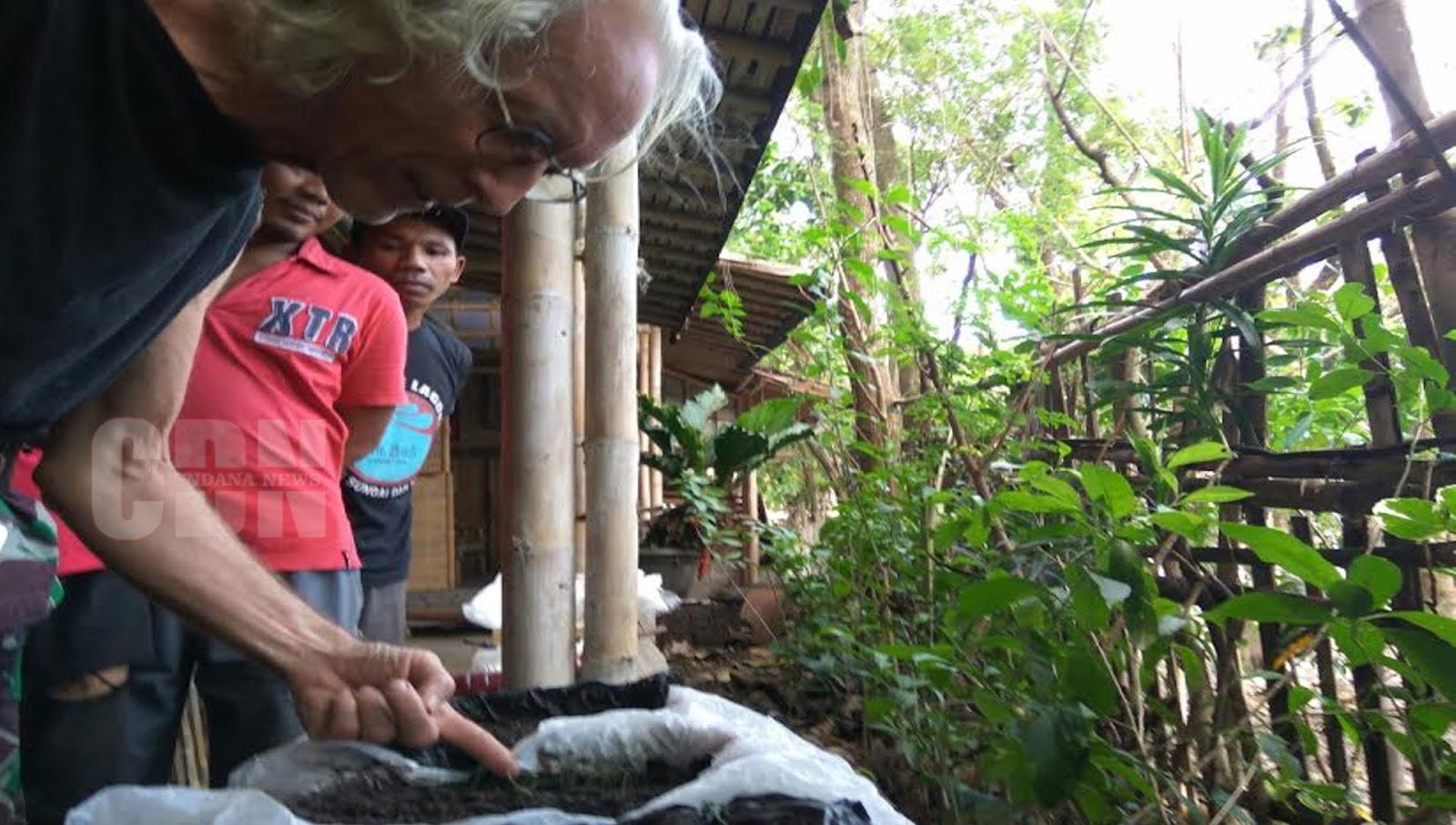 Philip membudidayakan bibit tanaman indigo melalui cara bertanam di dalam pot (sumber : cendananews.com)