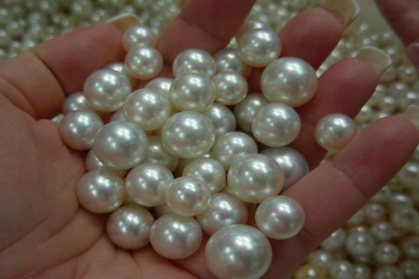 Mutiara South Sea Pearl (sumber : damniloveinodnesia.com)