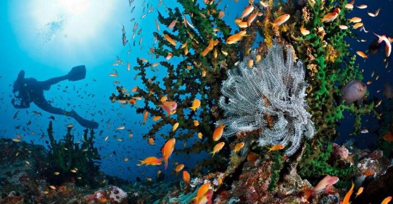 Keindahan bawah laut Pulau Rubiah (©indonesia-tourism.com