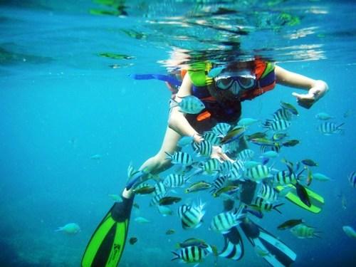 Snorkeling di Tureloto dengan biota laut yang sangat beragam (sumber : lihat.co.id)