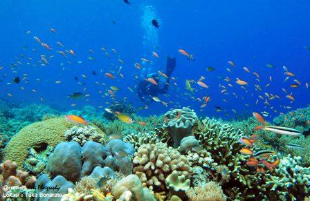 Alam bawah lautnya menjadi surga bagi para penyelam (sumber : wisatasulawesi.com)