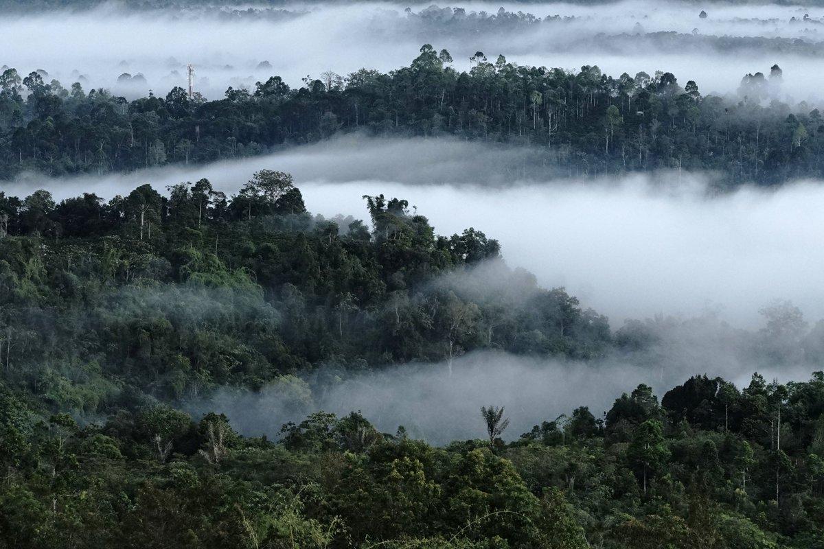 Hutan Hujan Tropis Sumatra | Foto : Sumatran Tiger