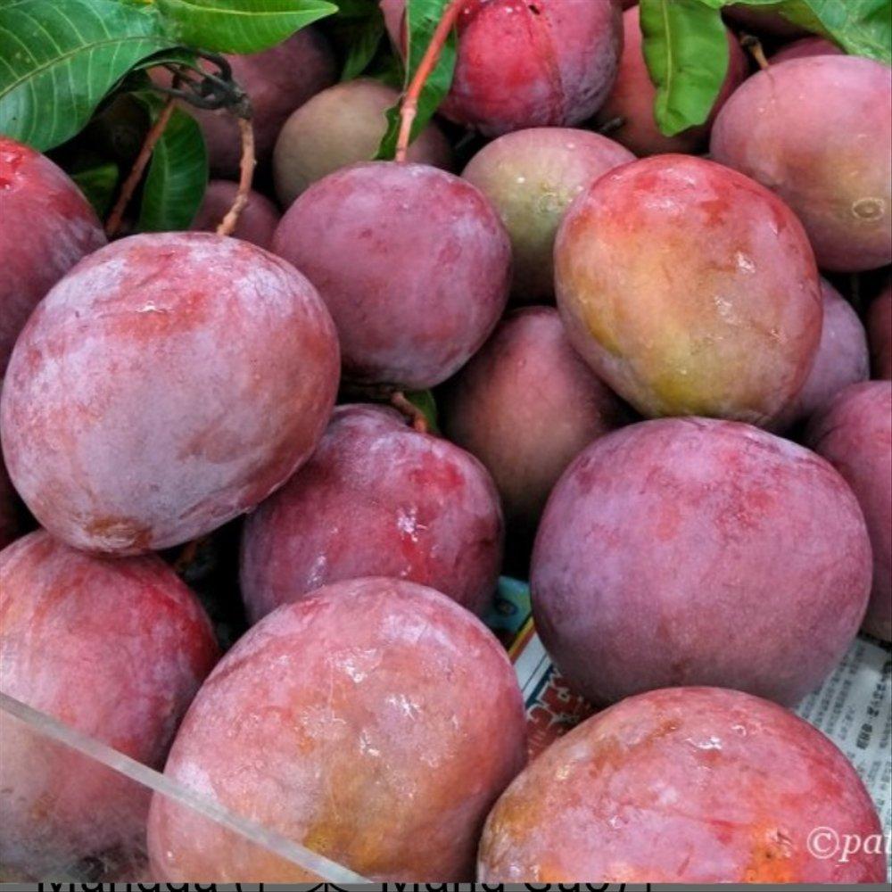 Mangga Apel. | Foto : Bukalapak