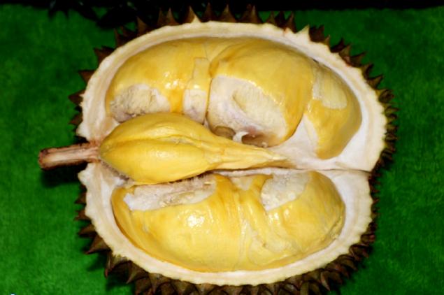 Durian Matahari | taniorganik.com
