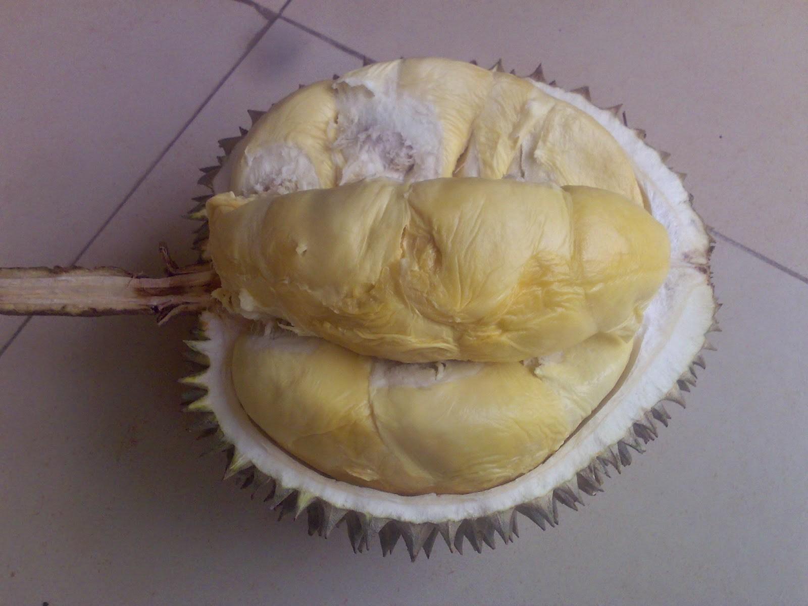 Durian Sigadung | jadiberita.com