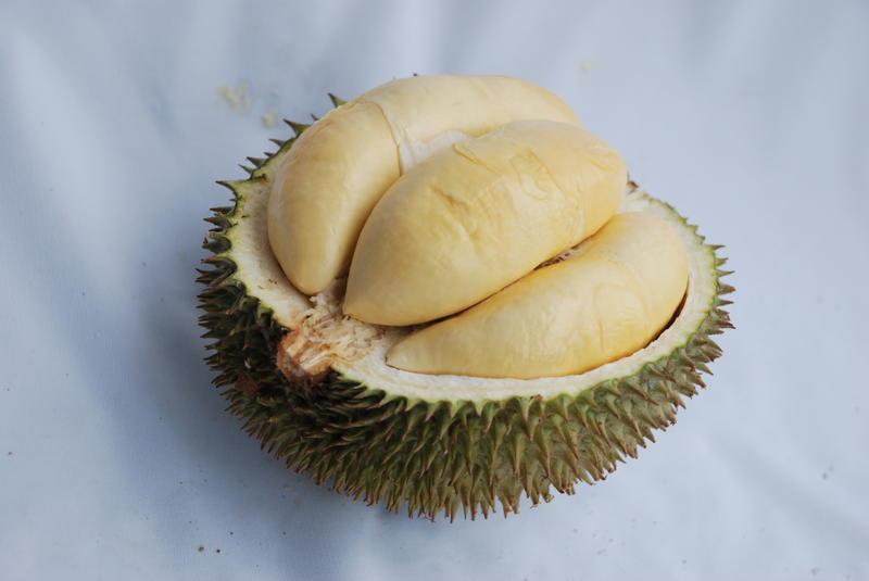 Durian Siterong | jadiberita.com