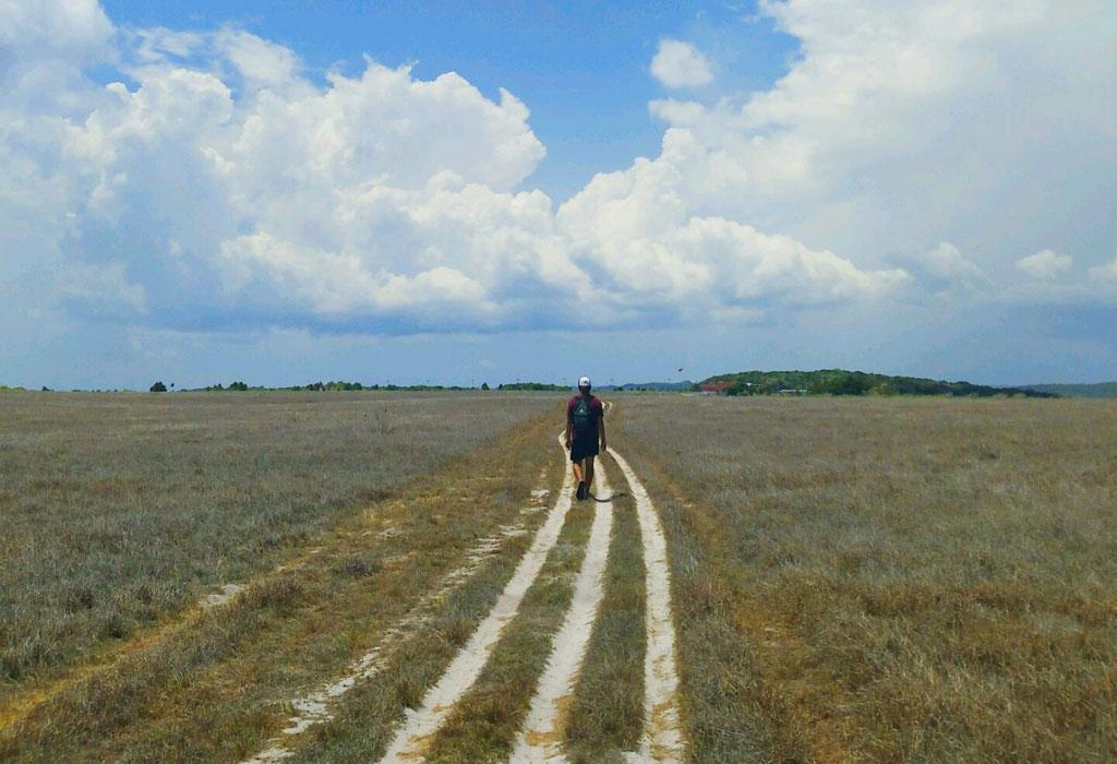 Padang rumput yang mengering di Pulau Ndana